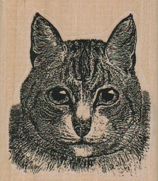 Serious Cat Face 2 1/4 x 2 1/2-0