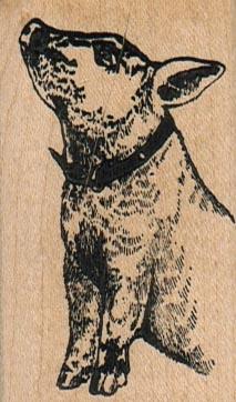 Pig In Collar 1 1/2 x 2 1/2-0