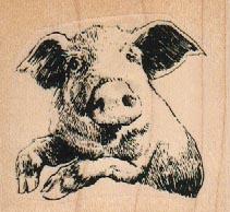 Pig Looking Sideways 2 1/4 x 2-0