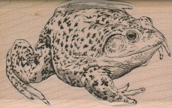 Fat Toad 2 x 3-0