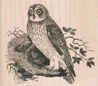 Owl 3 1/2 x 3-0