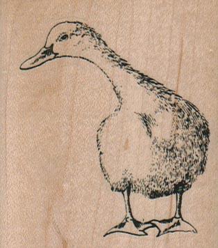 Curious Duck 2 1/4 x 2 1/2-0