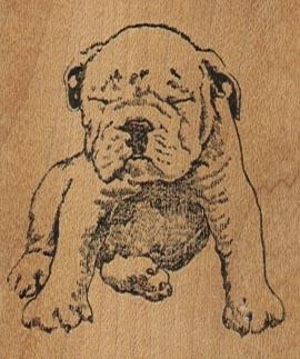 Squinting BullDog 2 x 2 1/4-0
