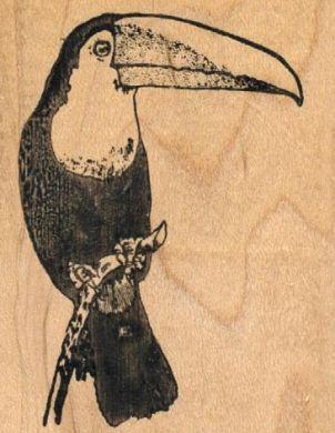Toucan Small 2 x 2 1/2-0