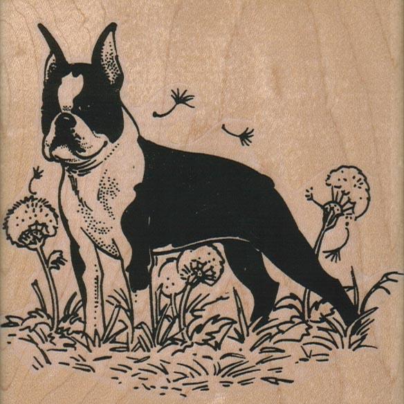 Boston Terrier in Dandelions 4 x 4-0