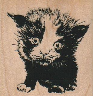 Scared Cat 2 1/4 x 2 1/4-0