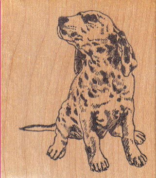 Spotted Dalmatian Looker 2 1/4 x 2 1/2-0
