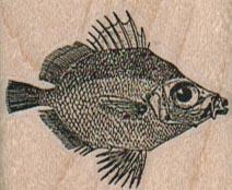 Big-Eyed Fish 1 1/2 x 1 1/4-0