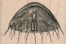 Jellyfish 2 x 1 1/4-0