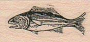 Surprised Fish 3/4 x 1 3/4-0