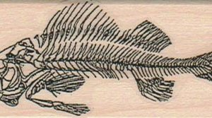 Fish Bones 1 1/4 x 2 3/4-0