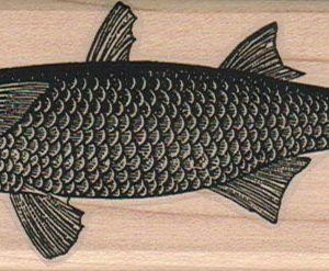 Mullet Fish 1 3/4 x 4 1/2-0
