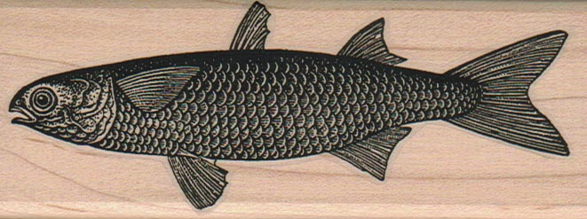 Mullet Fish 1 3/4 x 4 1/2