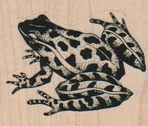 Leopard Frog 2 3/4 x 1 3/4-0