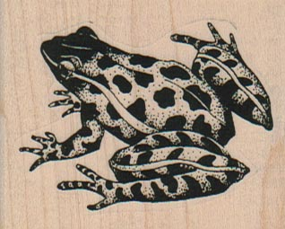 Leopard Frog 2 3/4 x 1 3/4