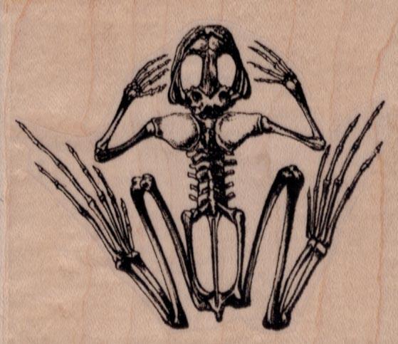Frog Skeleton 3 x 2 1/2