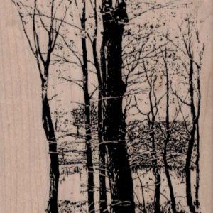 Winter Woods Scene 4 x 5 1/2-0