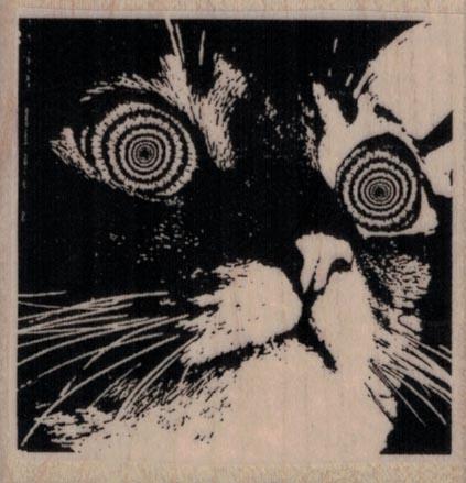 Hypnotic Cat 2 1/4 x 2 1/4