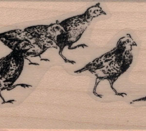 Family of Quails 1 1/2 x 4-0