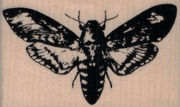 Deathhead Moth 3 x 1 3/4