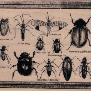 Bug Specimens 3 3/4 x 4 3/4-0