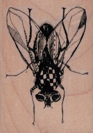 Whimsical Fly 2 x 2 3/4