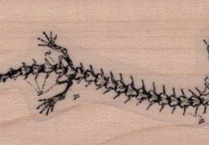 Lizard Skeleton Diagram 1 1/4 x 3-0