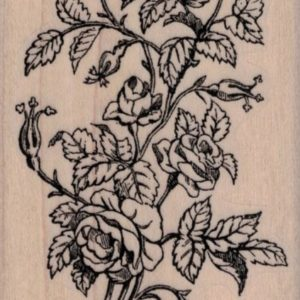 Rose Bush by Cat Kerr 2 1/4 x 3 1/2-0