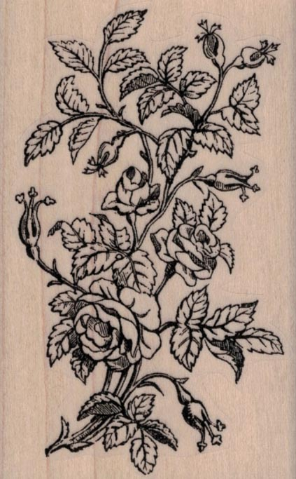 Rose Bush by Cat Kerr 2 1/4 x 3 1/2