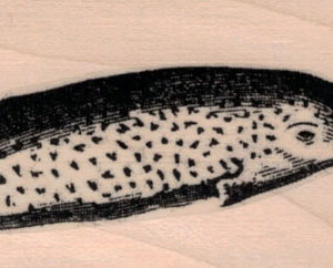 Narwhal 1 1/2 x 4 1/4-0
