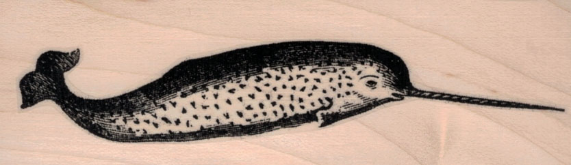 Narwhal 1 1/2 x 4 1/4