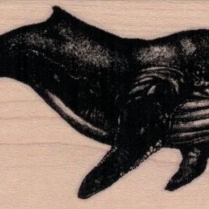 Humpback Whale 2 x 4-0