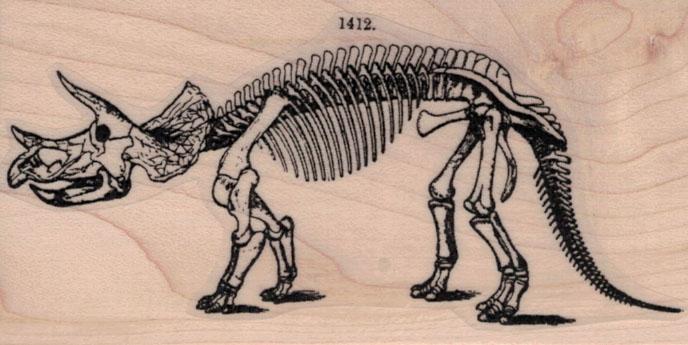 Triceratops Skeleton 2 x 3 1/2