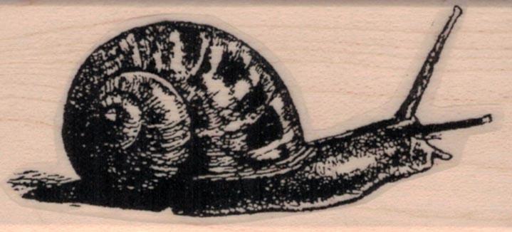 Snail 1 1/4 x 2 1/2